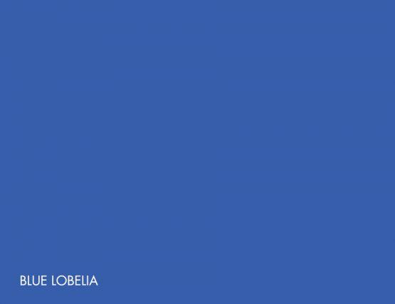 Blue_Lobelia